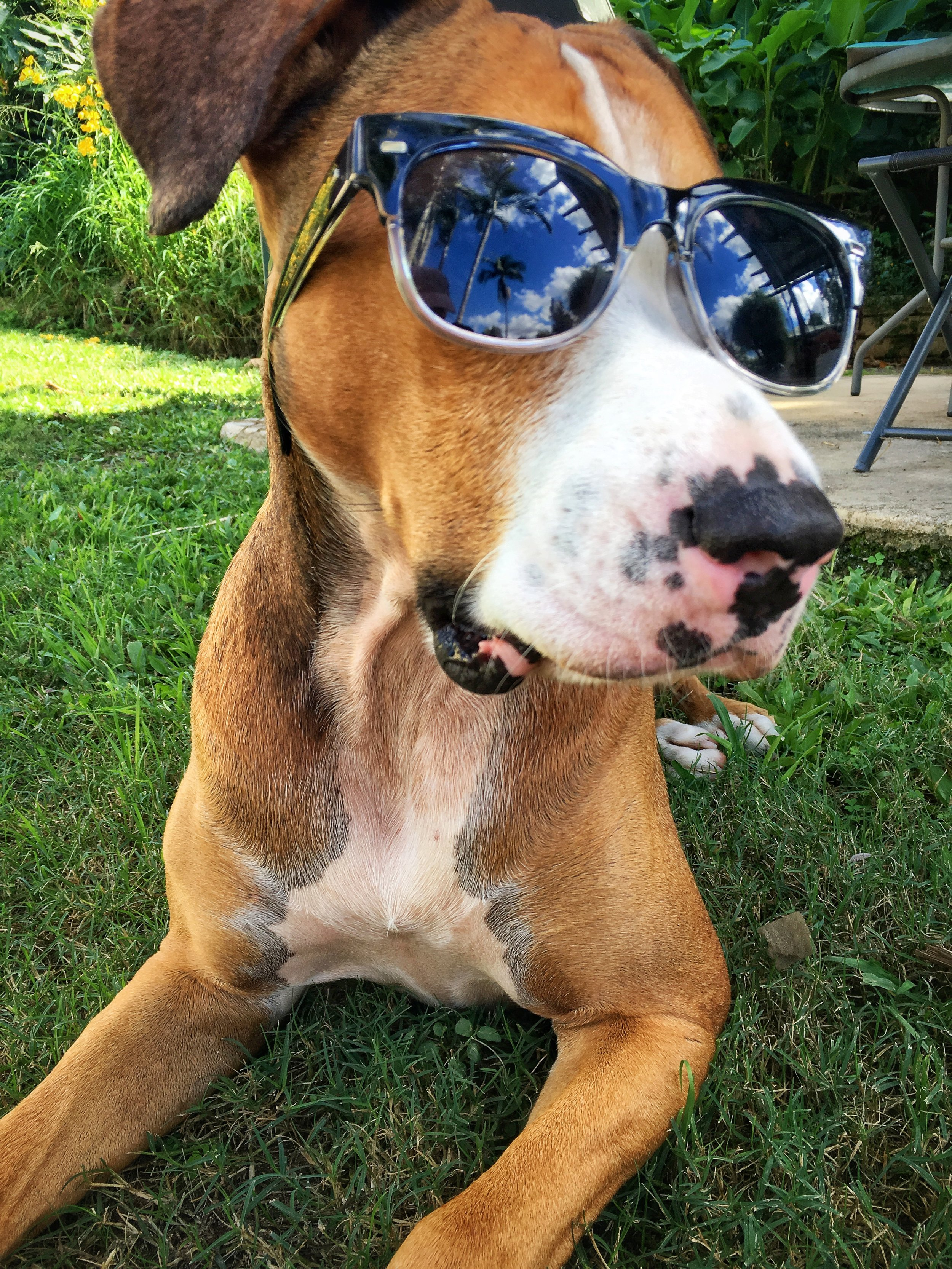 Amos rocking some sunglasses - I took this shot in about 5seconds before he tipped them off.