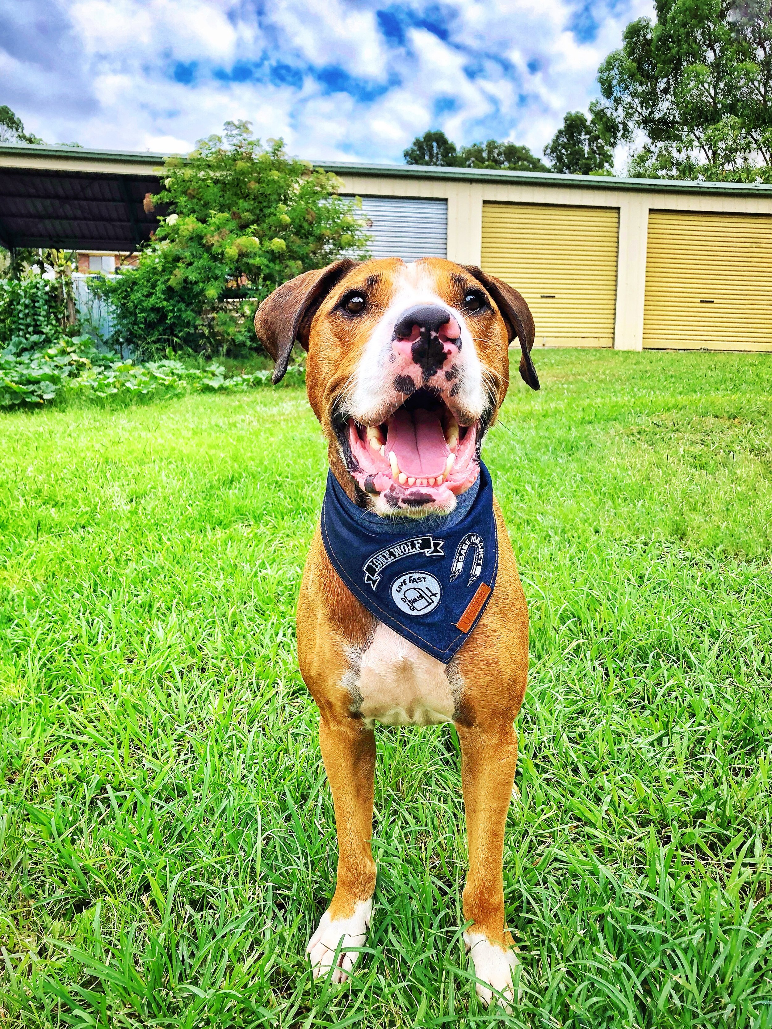 Amos just loves being outdoors. Bandana by  Pet Haus
