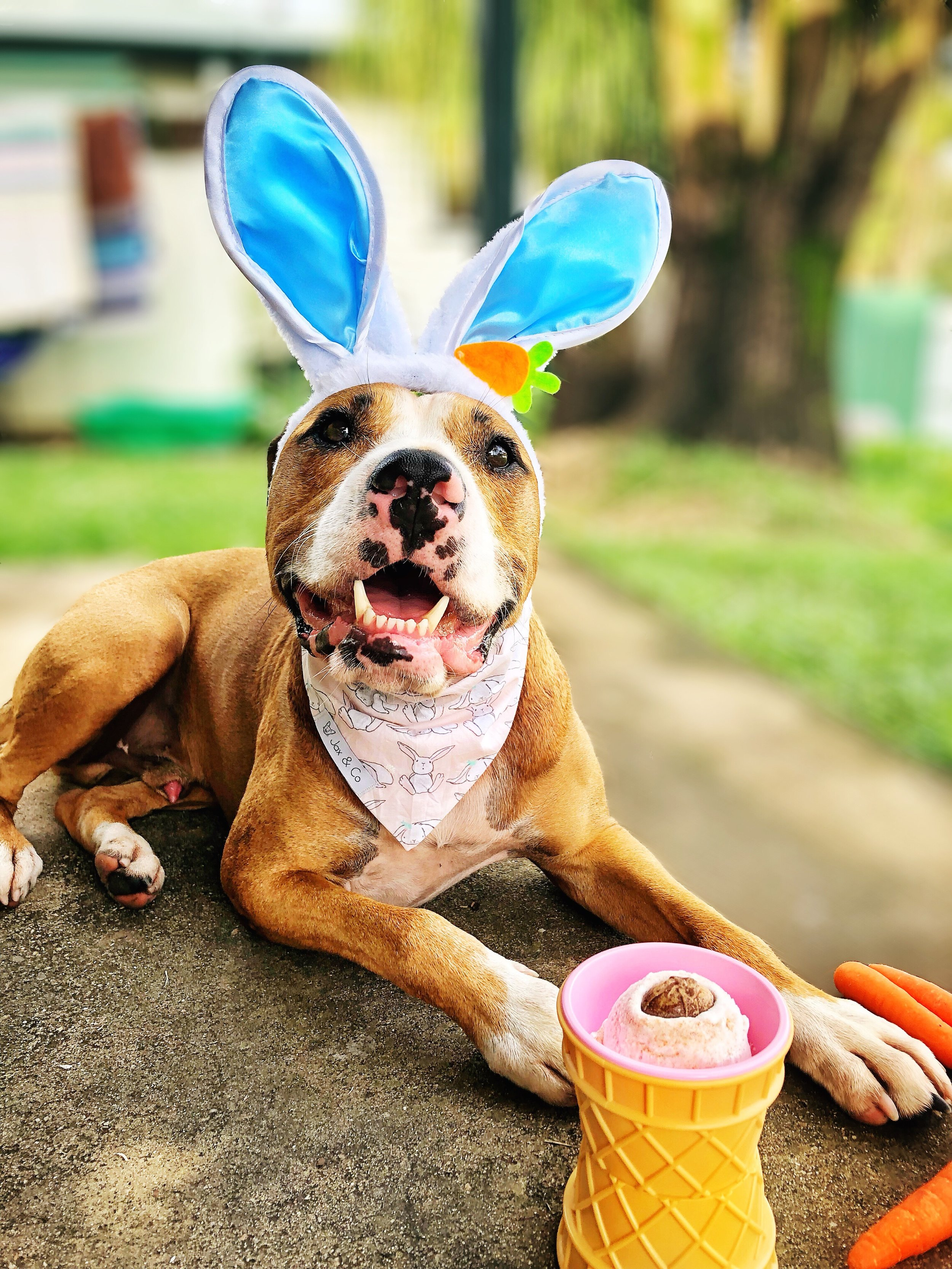 """Amos enjoying his special edition """"EGG-CELLENT"""" over the recent Easter Break"""