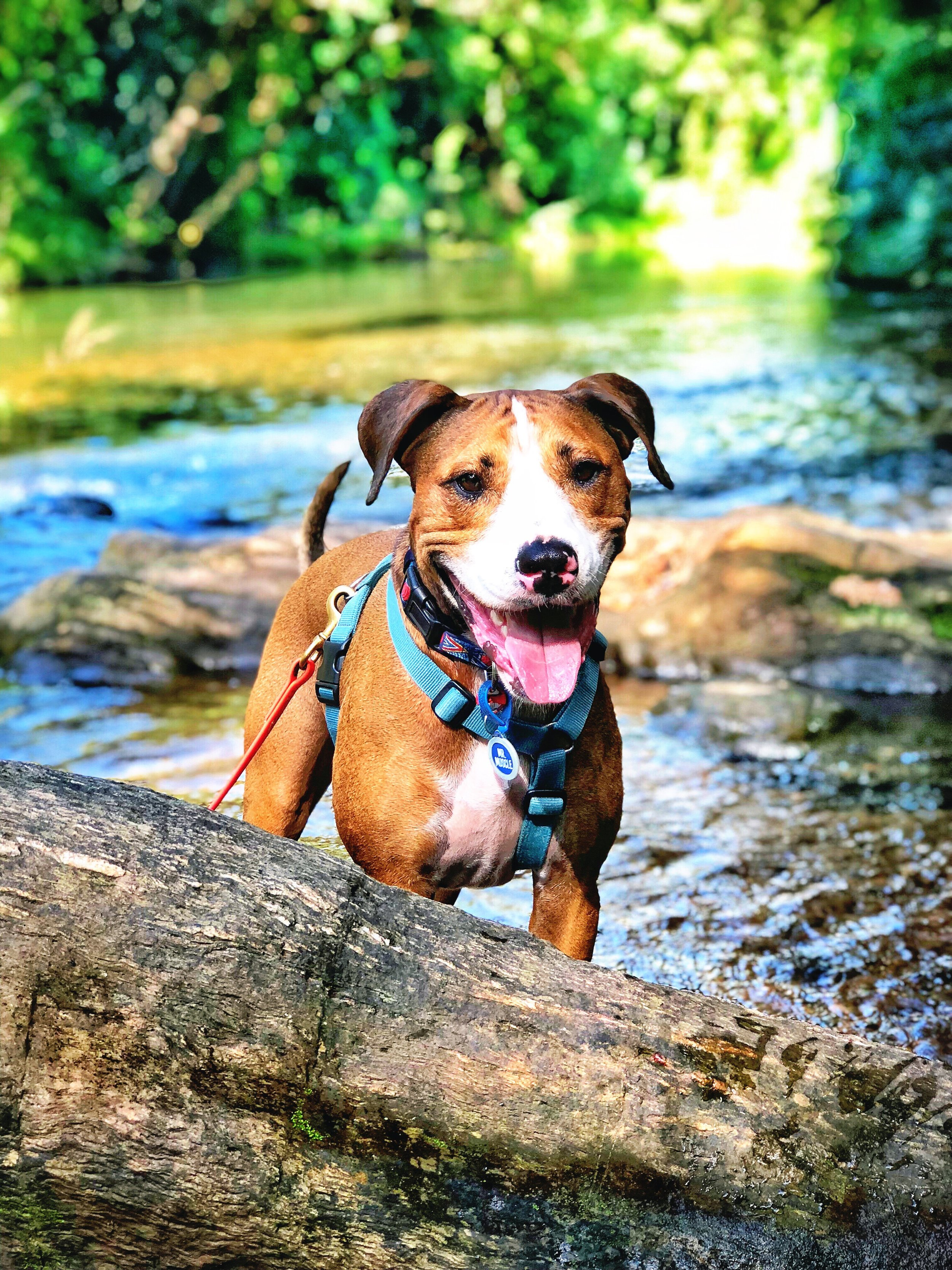 Enjoying life at the creek with his long lead