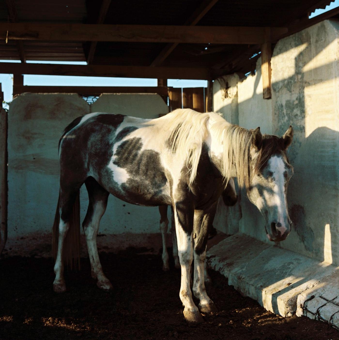 horse tekoa.jpg