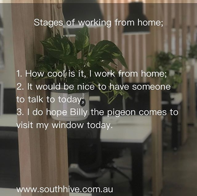 Working from home can be great in moderation but the novelty of working in ugg boots is often quickly replaced with feelings of isolation. We are human beings after all; we crave community and the infectious energy of other people in their productive zone helps us perform, innovate, feel emotionally engaged and charge forward. #southhivehub #sharedofficemelbourne #southmelbourne #coworkingmelbourne #albertpark #portmelbourne #lovewhereyouwork