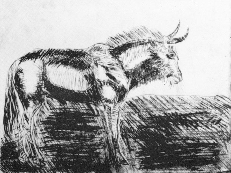 GNU DRYPOINT, 25x29,5 CM ON PAPER 50x70 CM