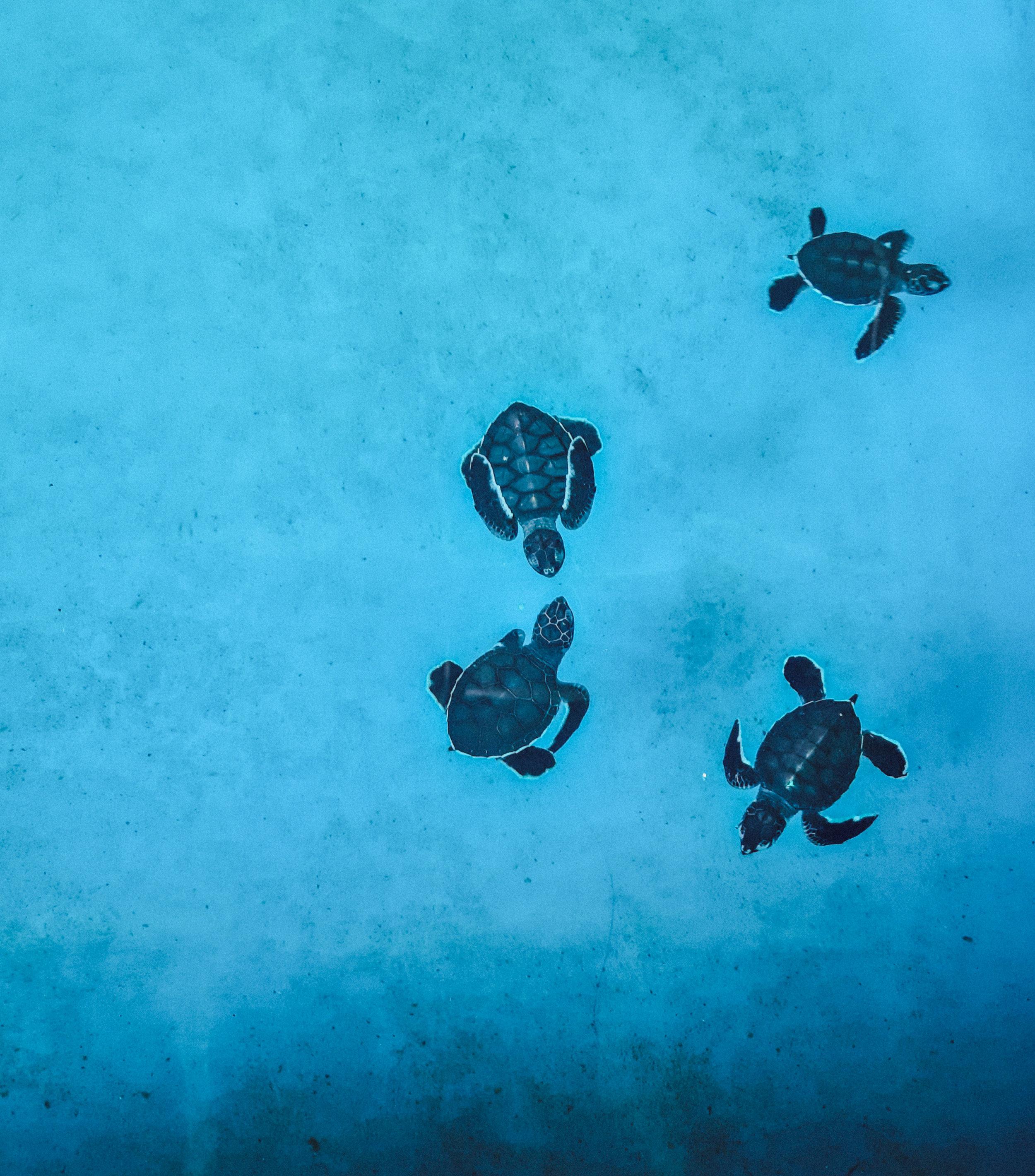 TurtleSanctuaryPenang.jpg