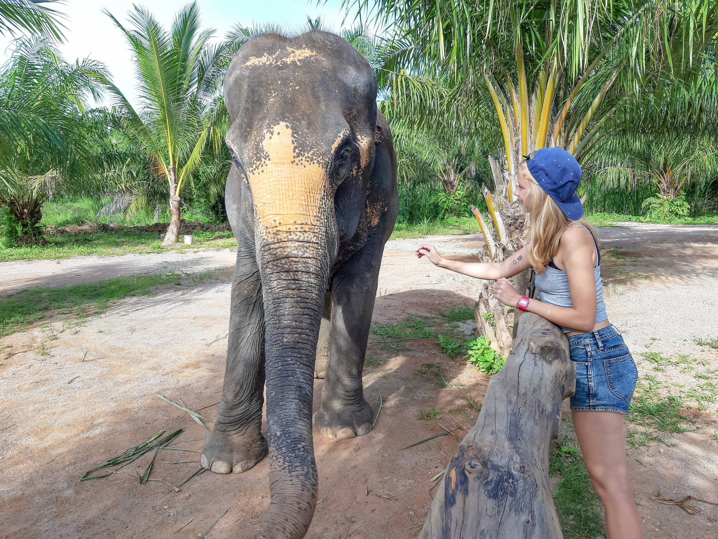 ElephantSanctuaryThailand_1.jpg