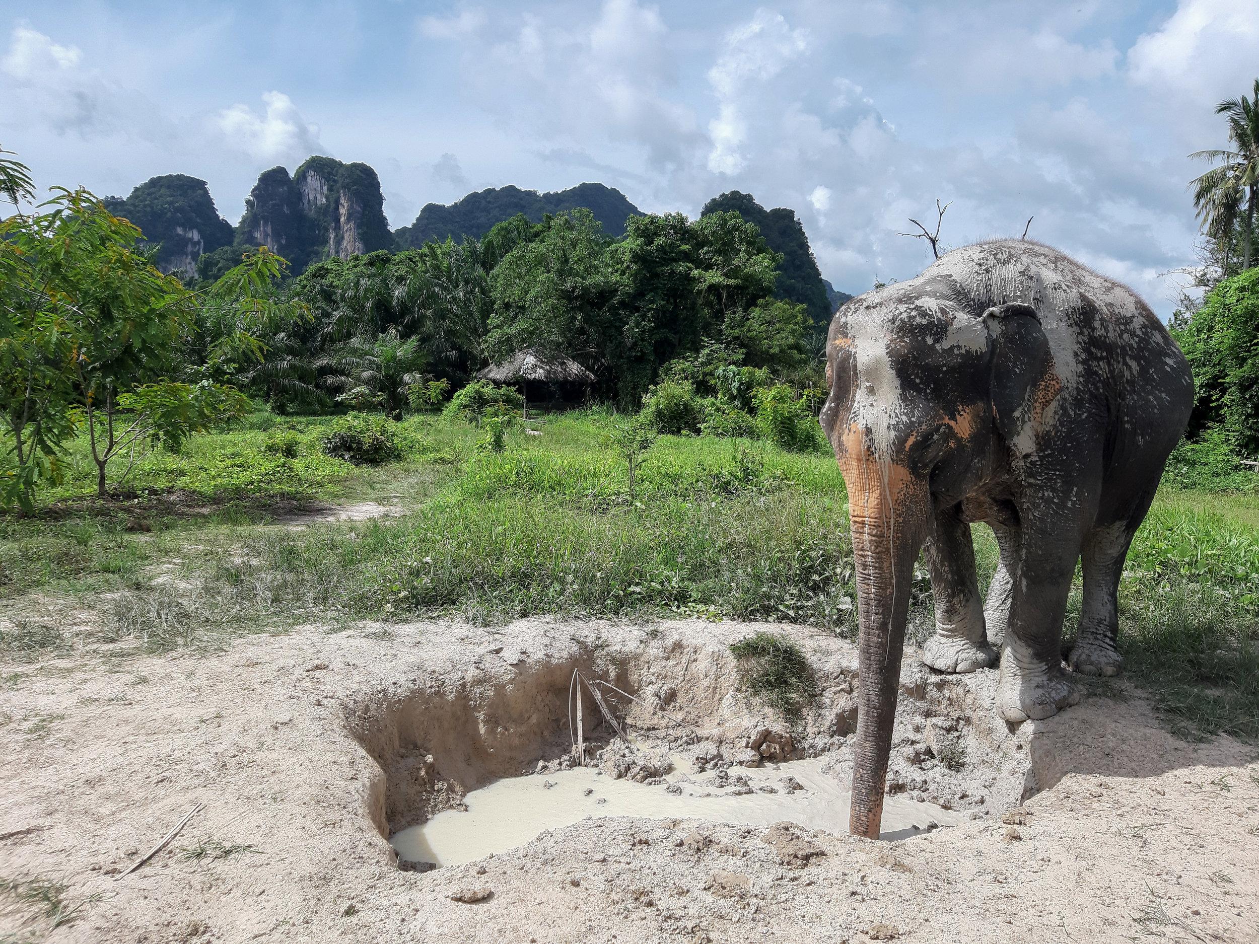 elephant-mud-bath-thailand-krabi_1.jpg