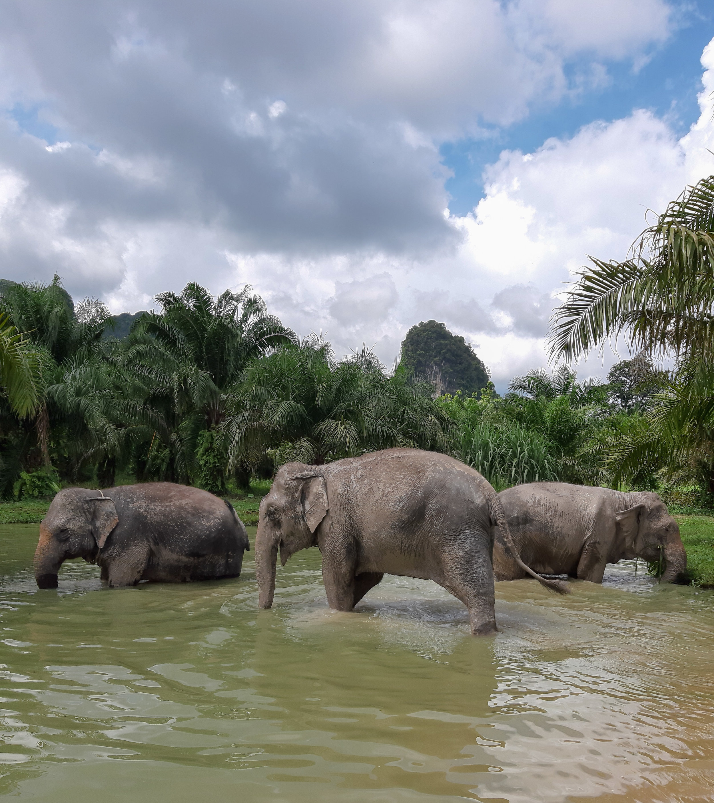 elephants-bathing-thailand-krabi_1.jpg