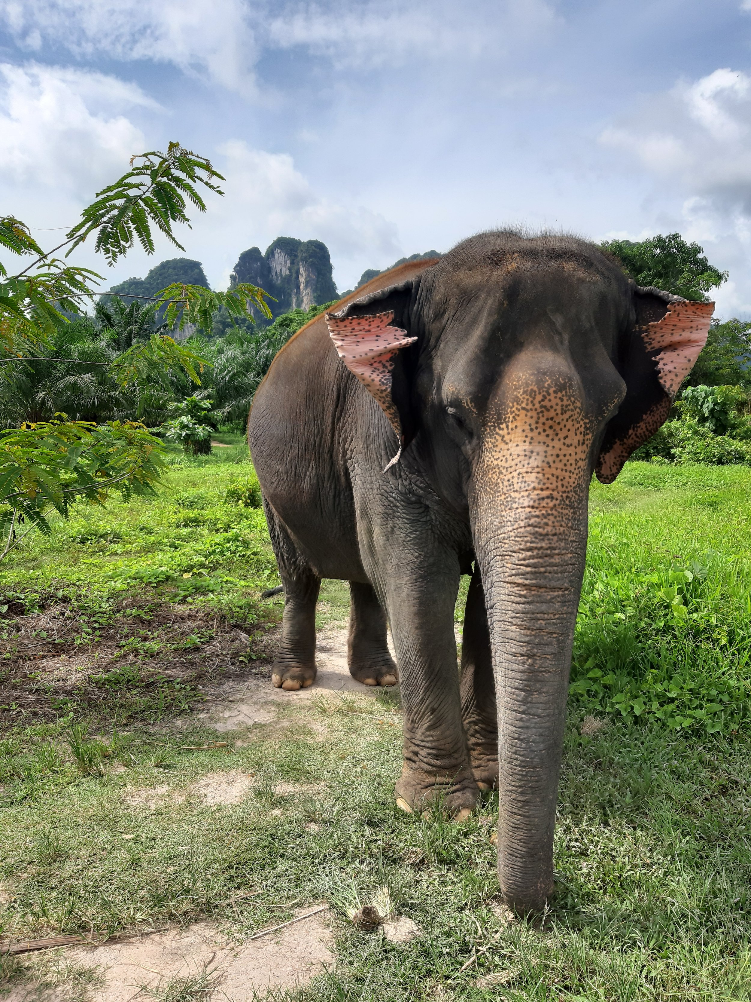 Thailand-elephant-sanctuary-tourism.jpg
