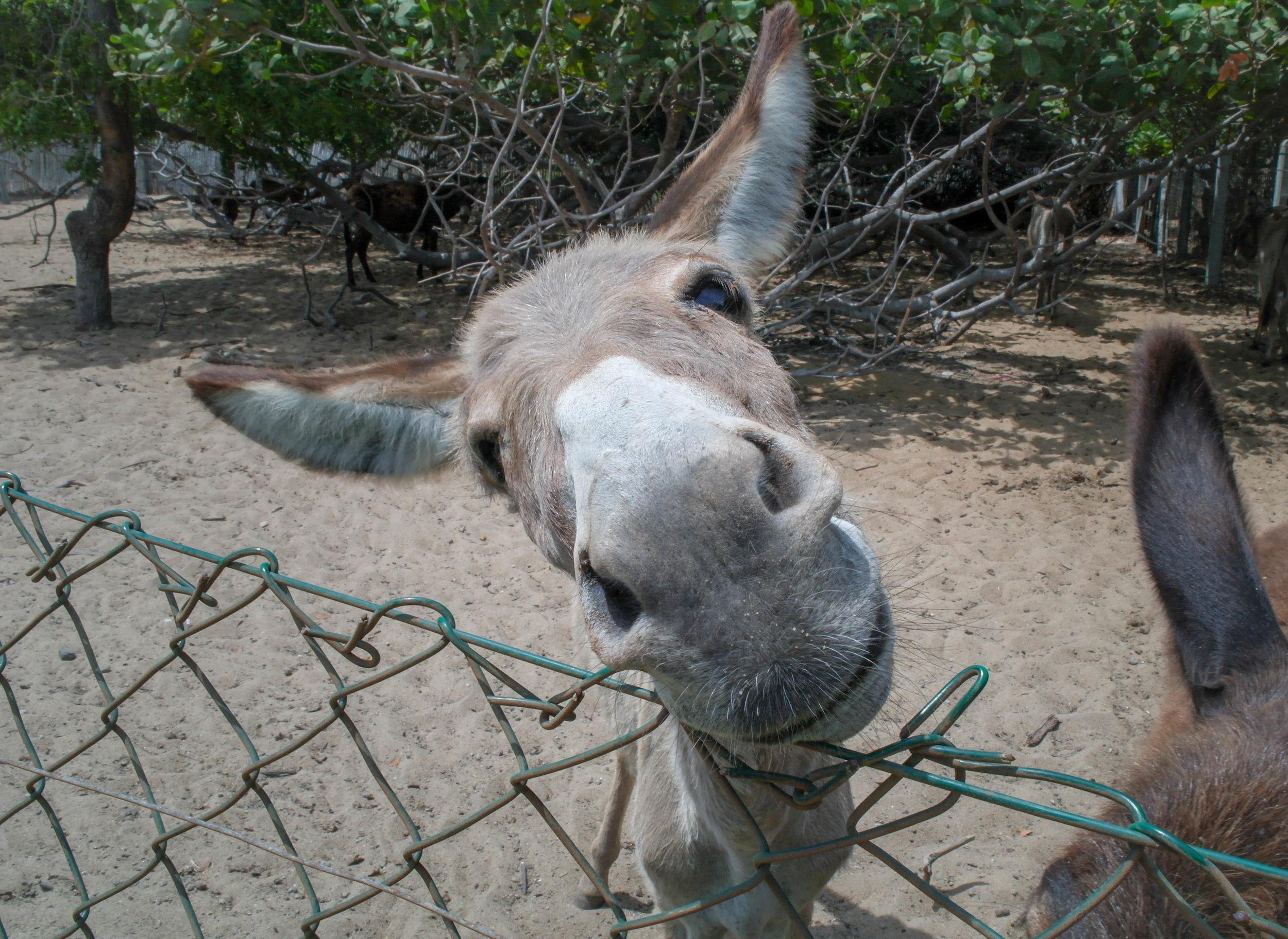 Donkey Clinic & Education Centre in Sri Lanka