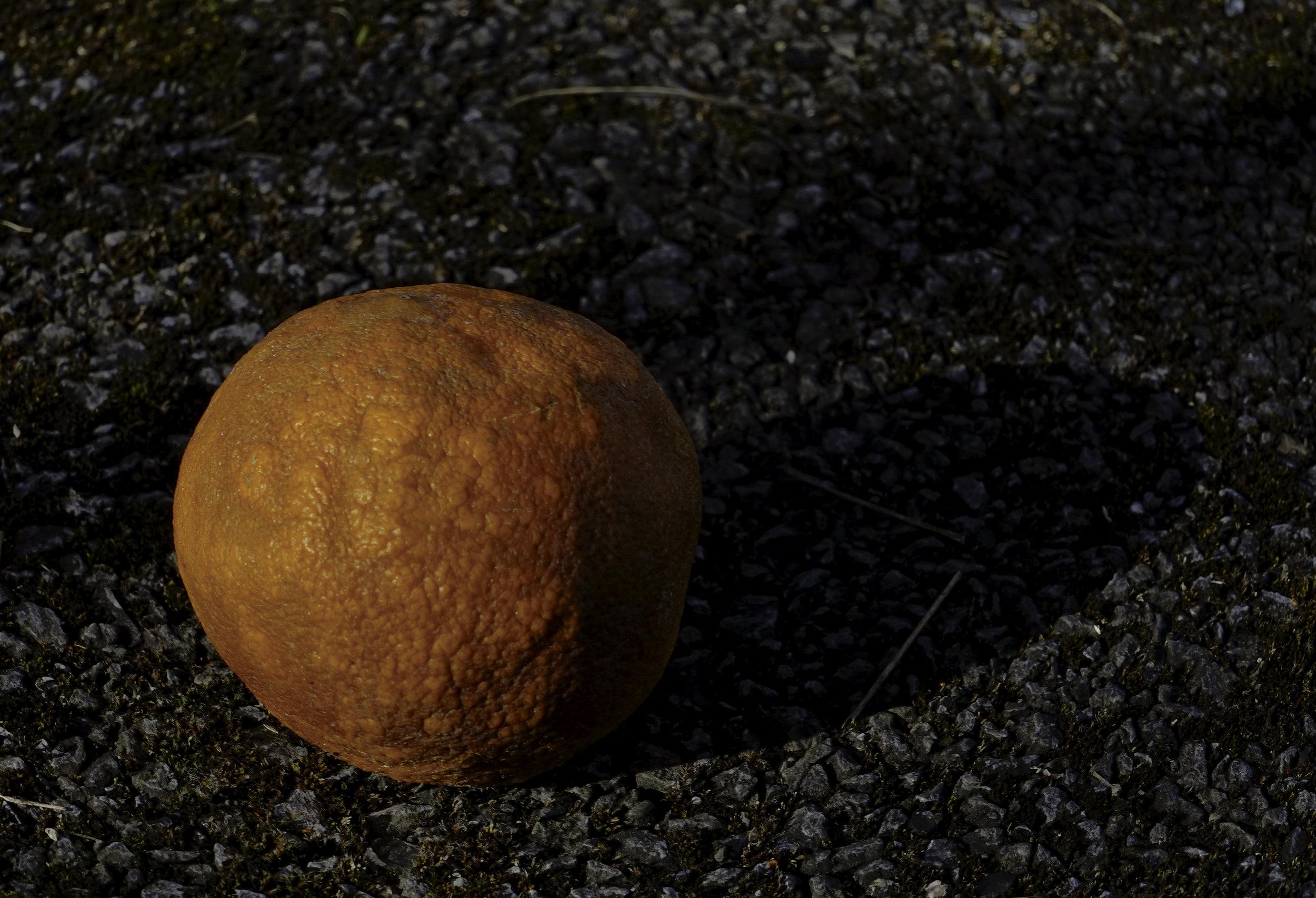 an old wrinkled orange on the road 2.jpg