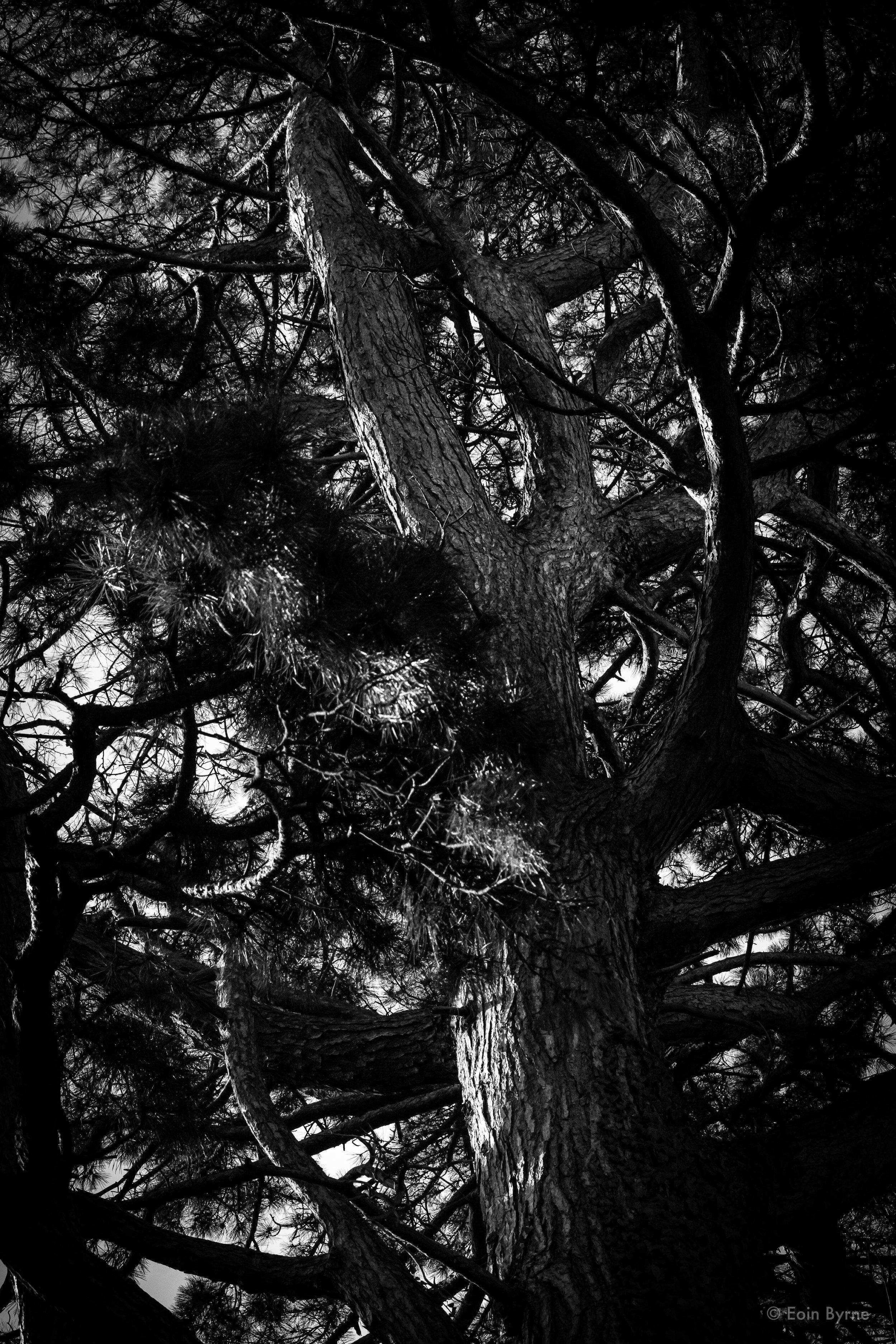 Tree in Palmerston park 1.jpg