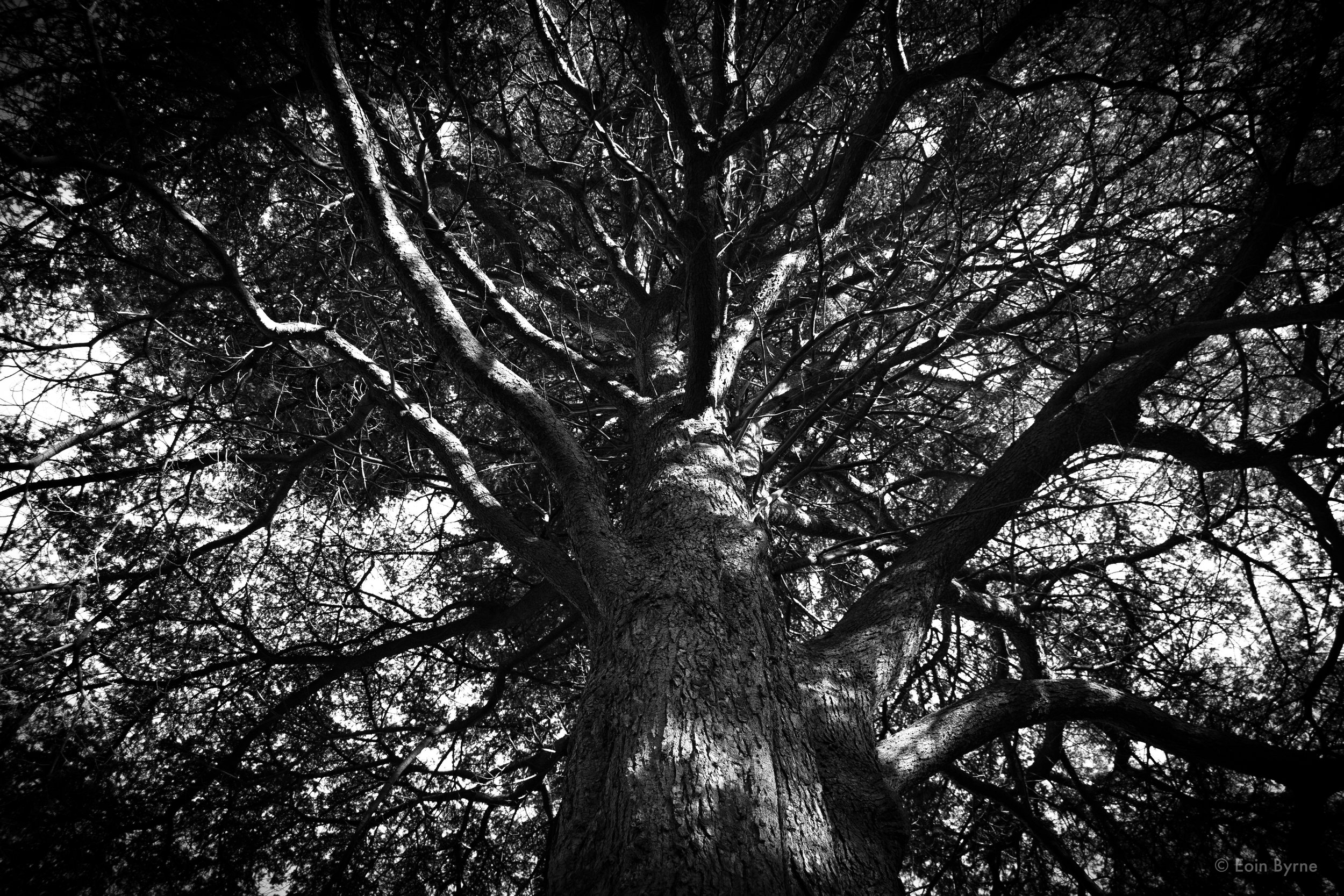 Tree in Palmerston park 2.jpg