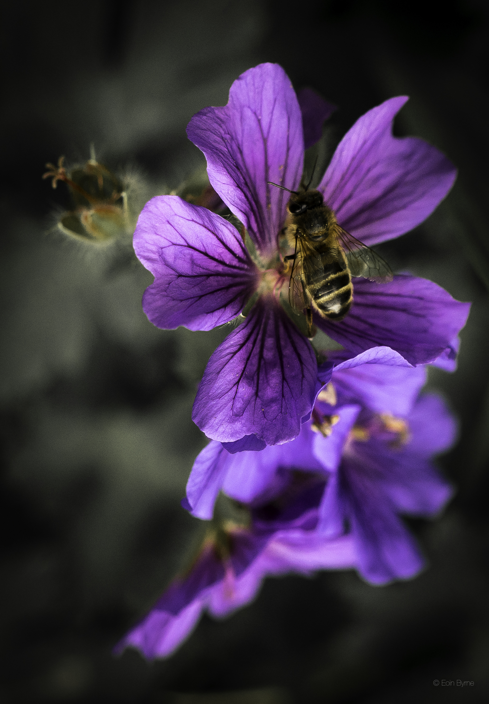 bee in the morning 1.jpg
