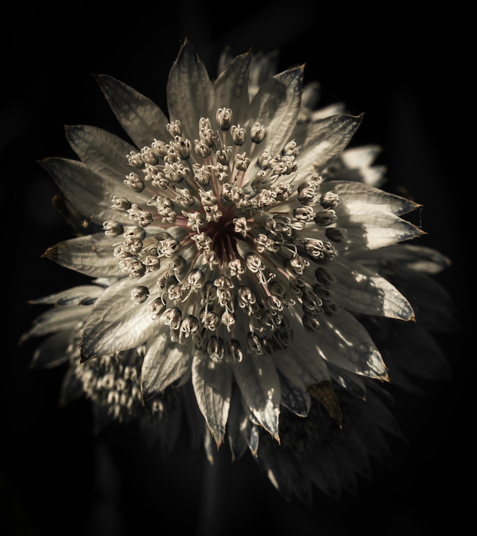 Star shaped flower for print.jpg