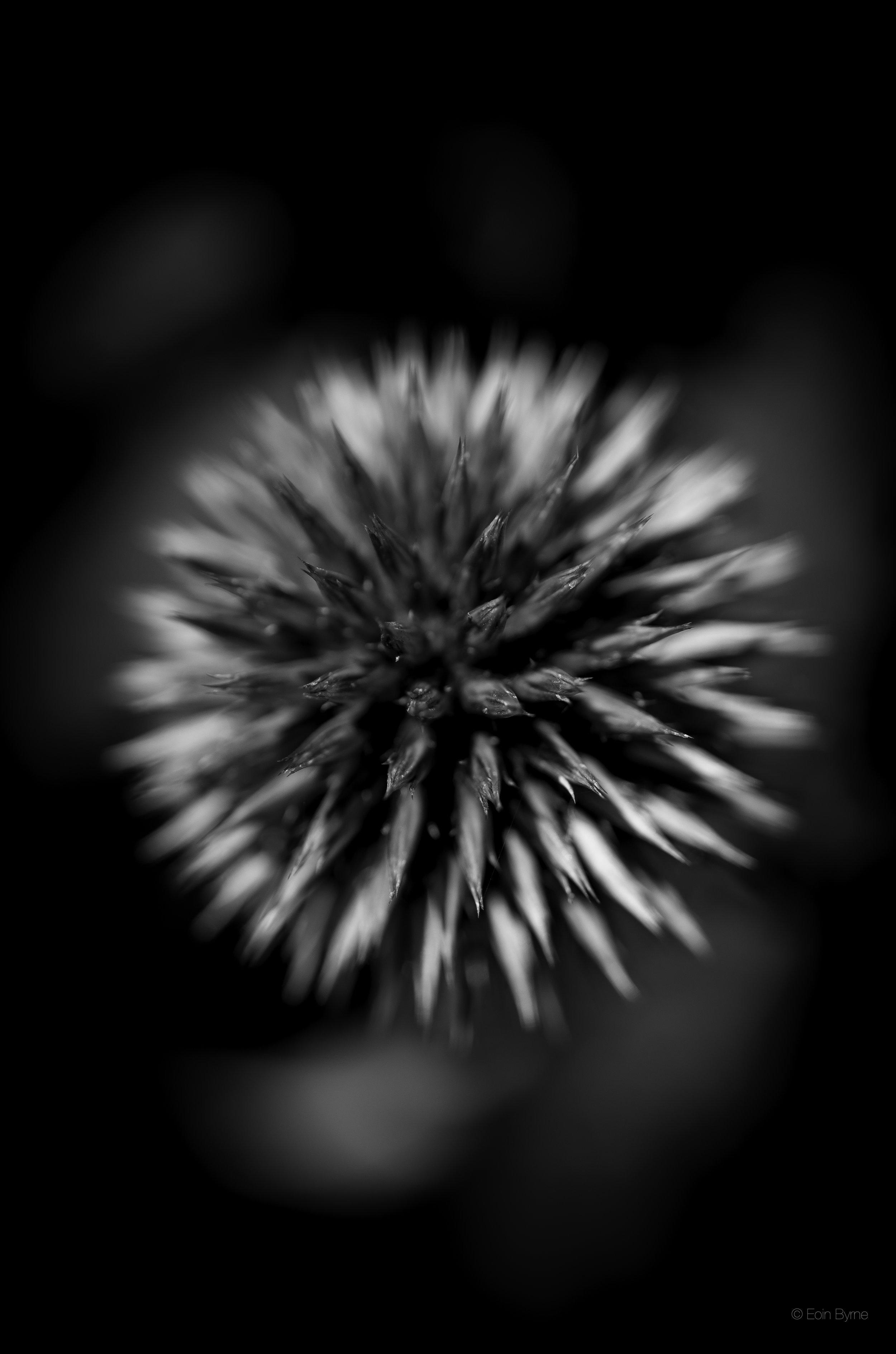 star shaped flower 3.jpg