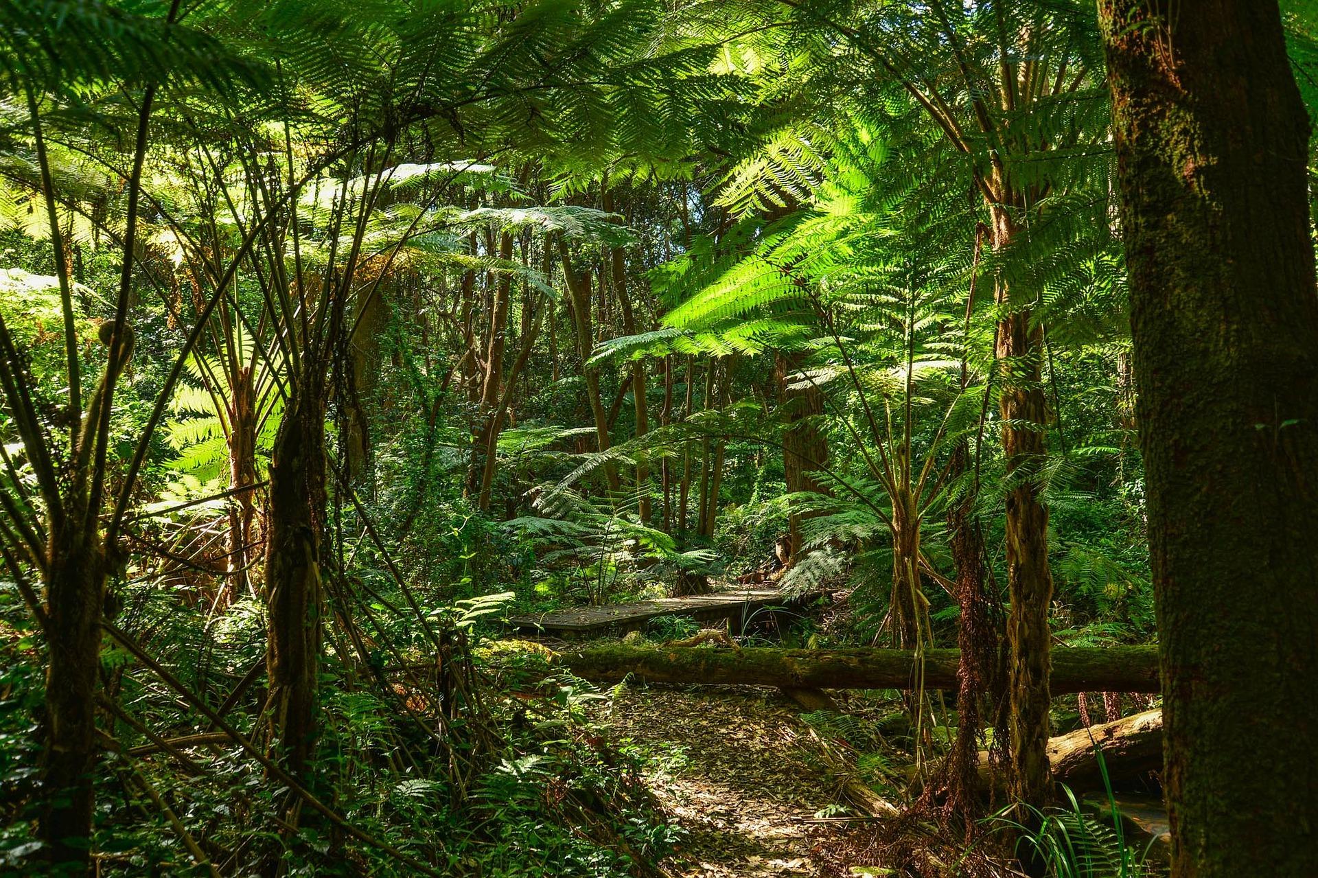 rainforest1.jpg
