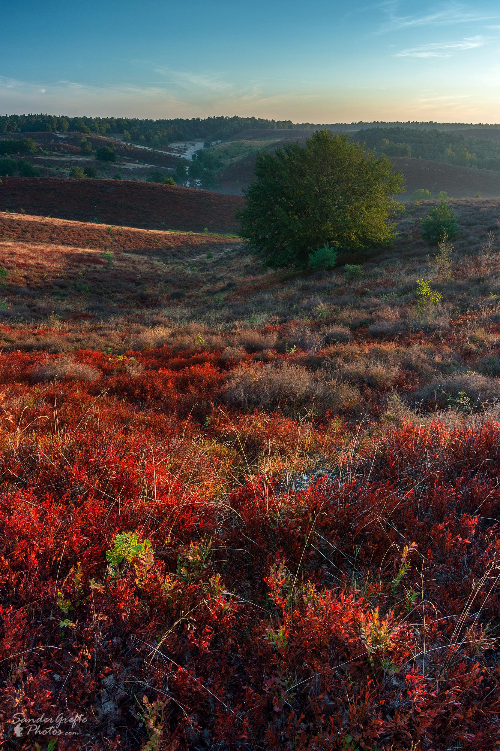 De rode tinten van de Posbank (15mm, iso 100, f11, 1/13s)