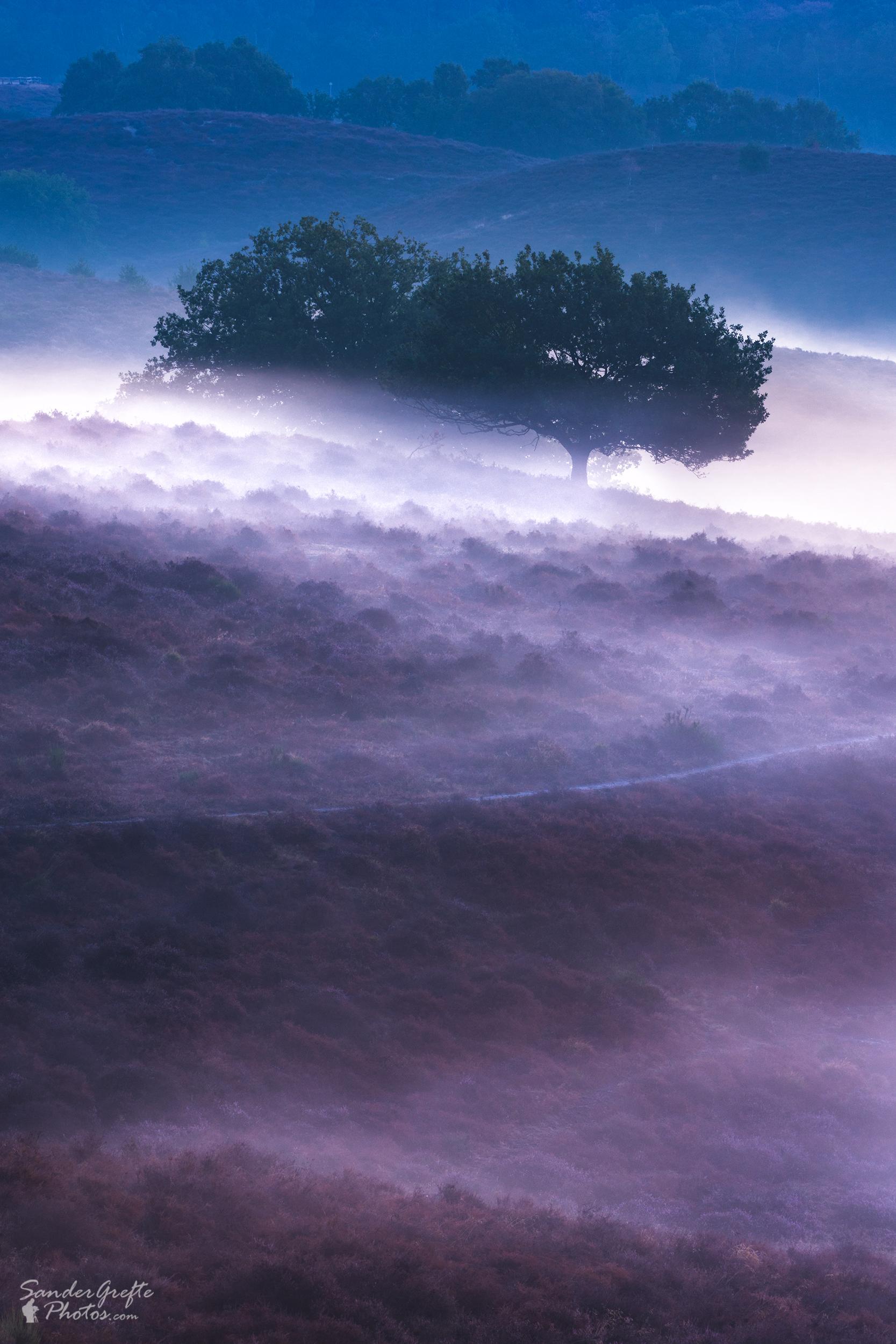 Gesloten landschap op de Posbank (120mm, iso 100, f11, 3s)