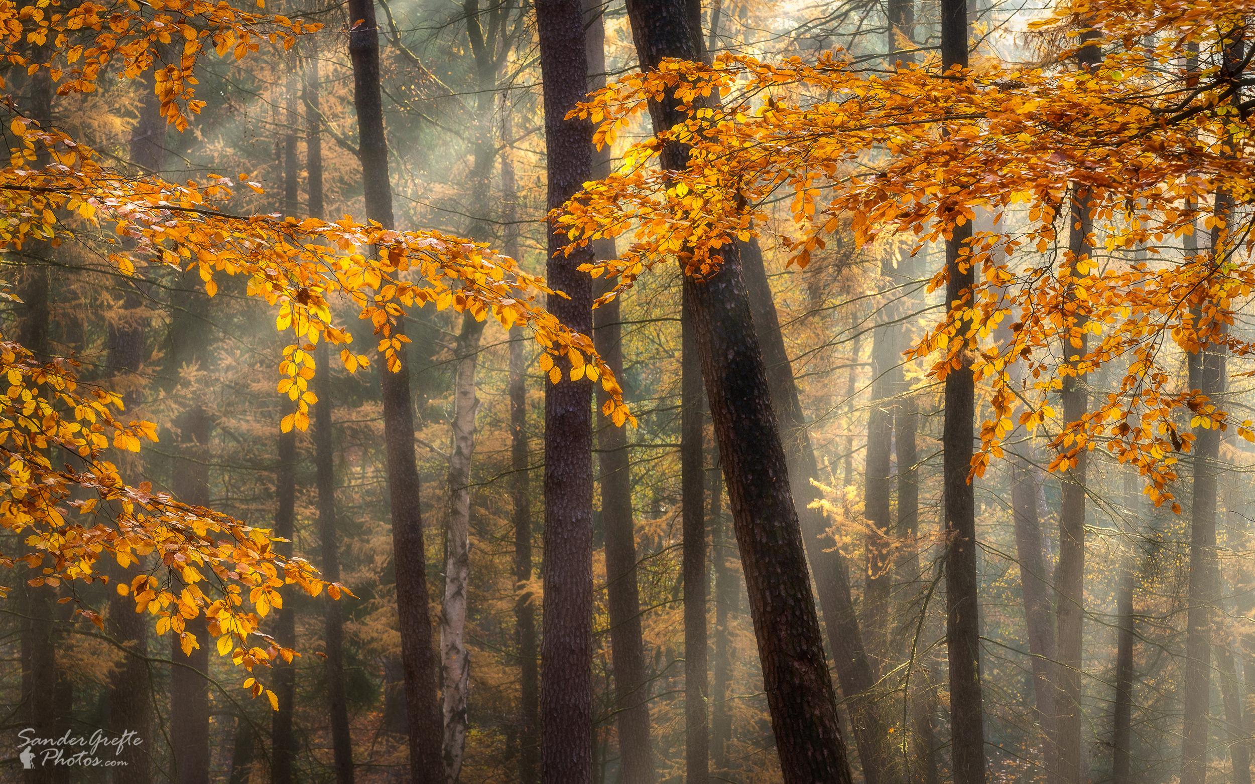 Een gordijn van herfstkleuren (120mm, iso 100, f11, 1/13s)