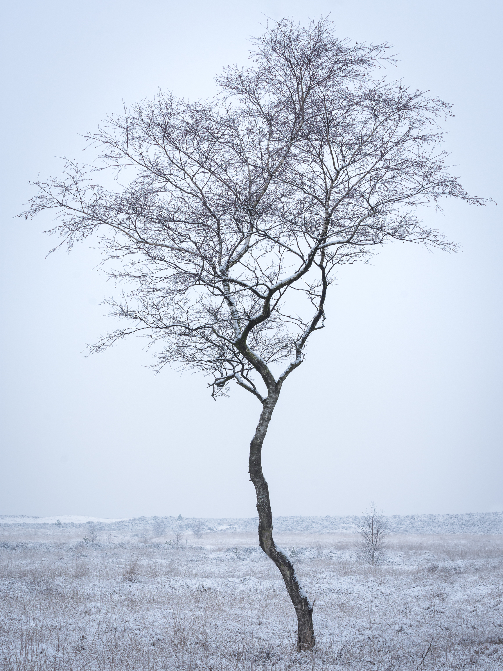 Lonely tree. iso 100, f11, 1/8s, 70mm.