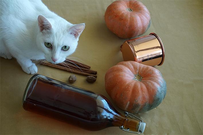 Chabi pumpkin 2 small.jpg