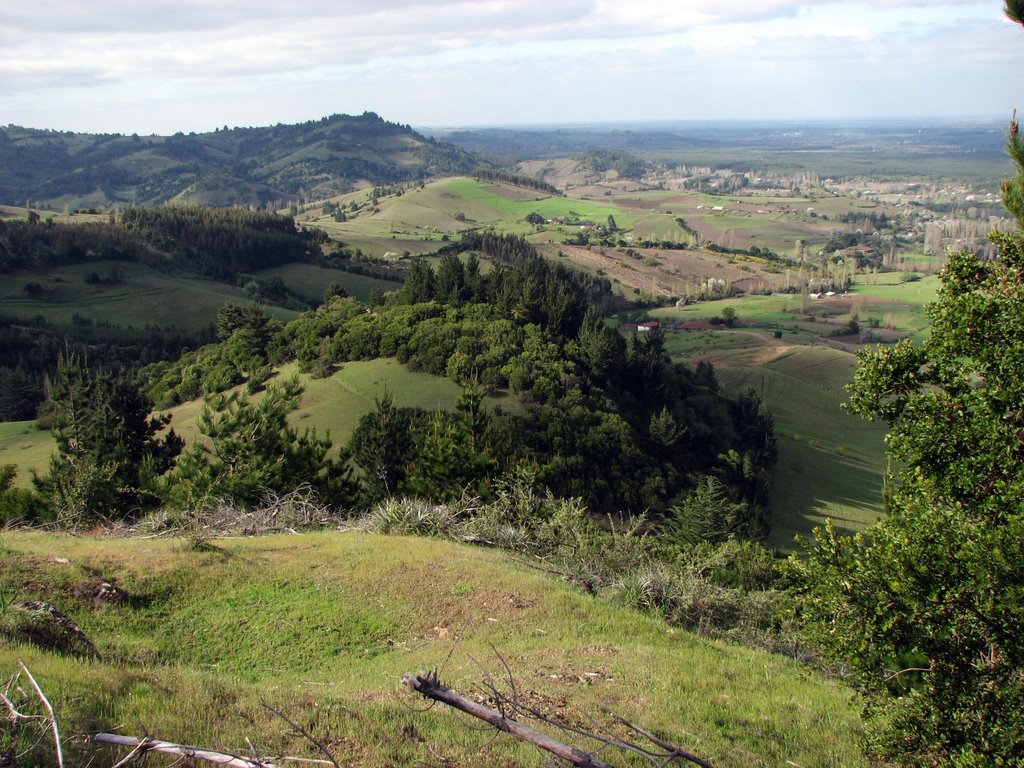 One of the sloping hills of Yumbel, Chile