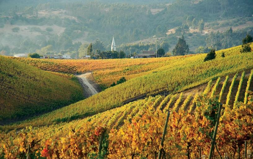Vineyards in the San Antonio Valley, Chile