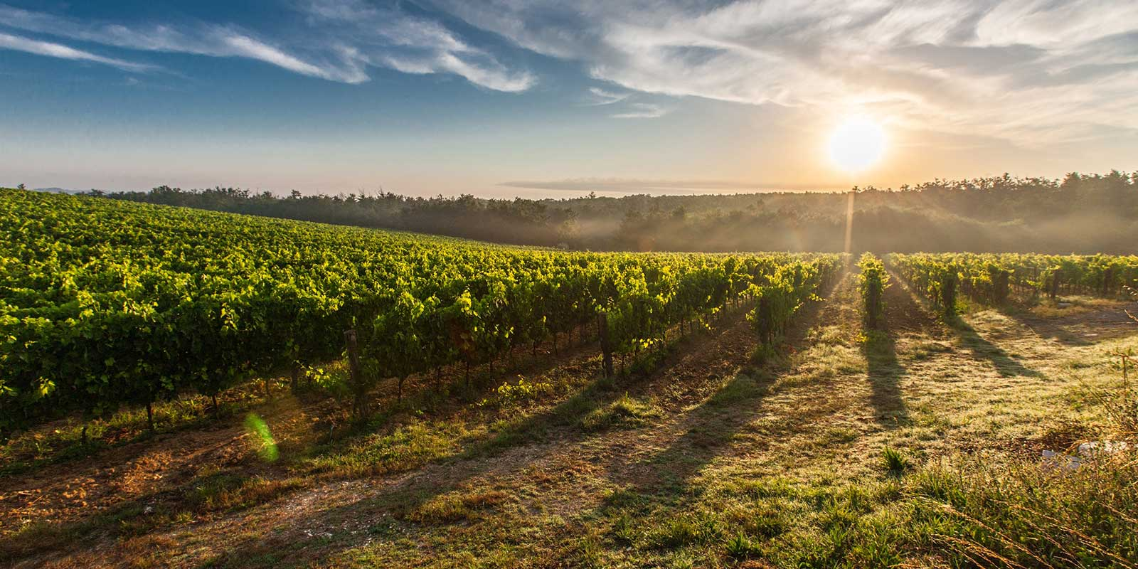 - Wines from The Land Down Under