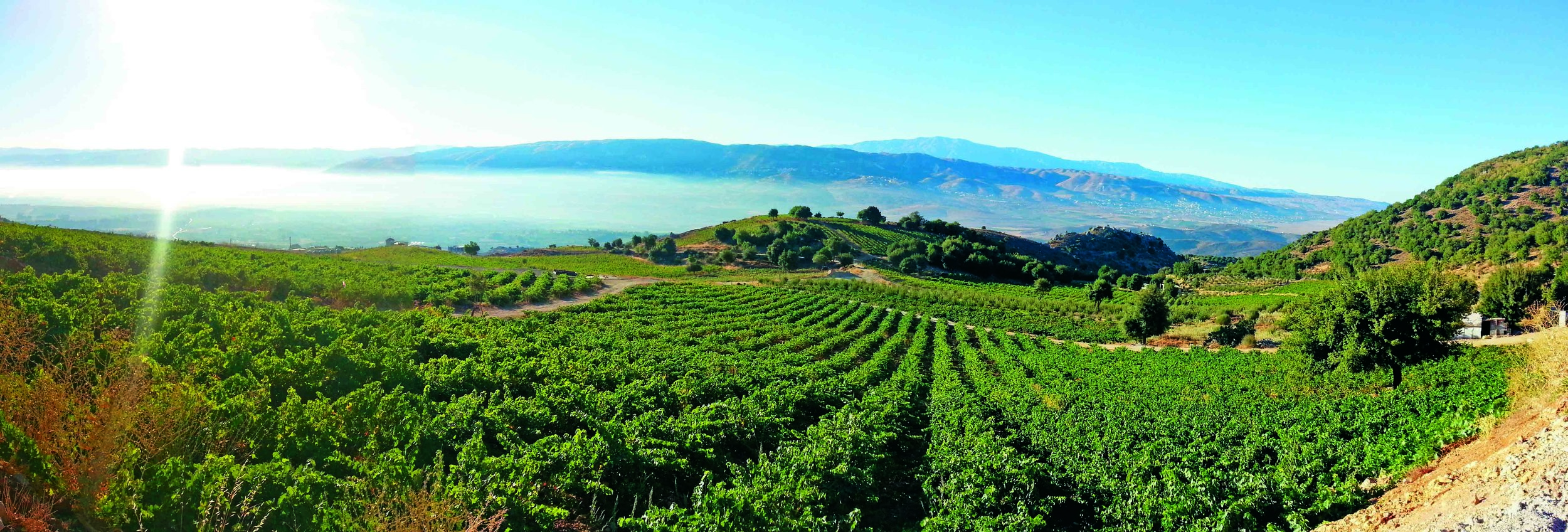 A Vineyard site in Lebanon
