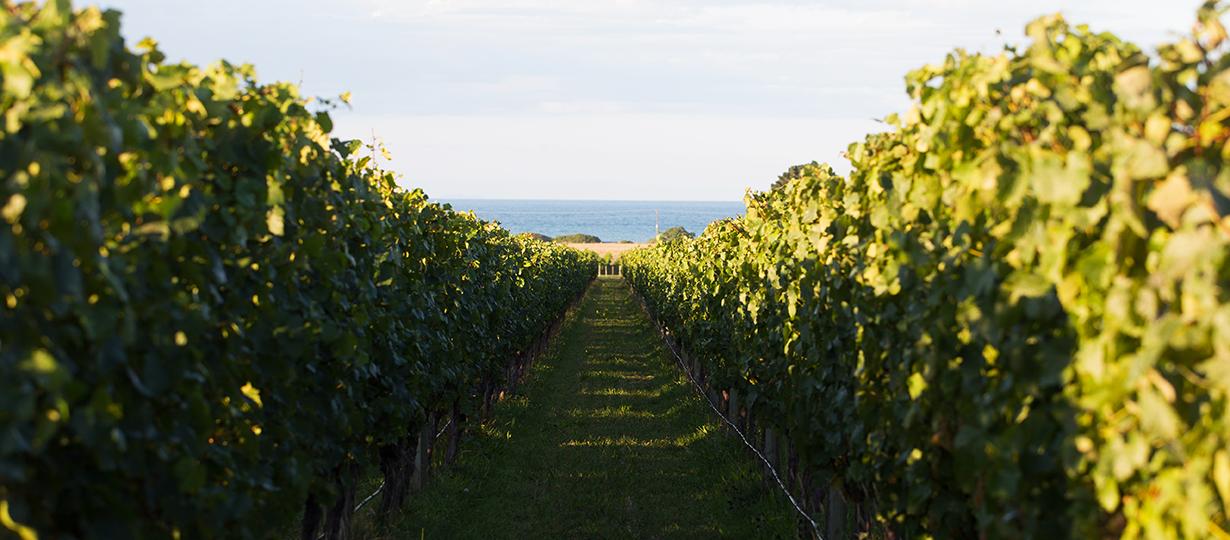 Craggy Range Kidnappers Vineyard