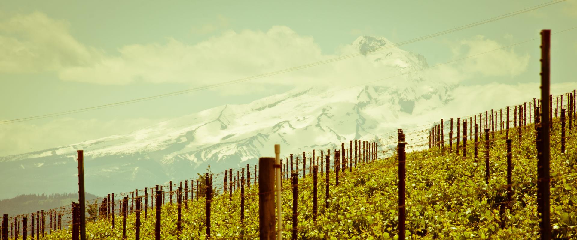A look at the vineyards at Savage Grace.