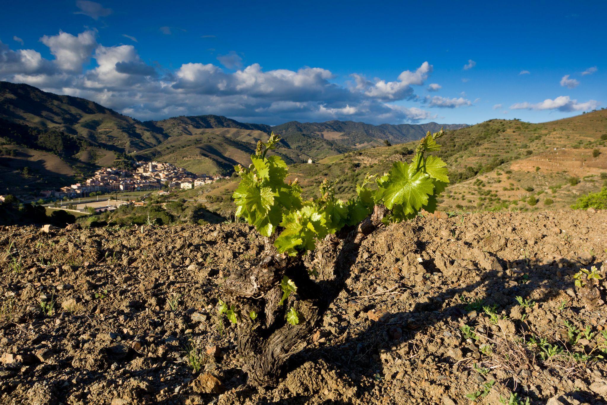 The vineyards of Alvaro Palacios in Priorat.