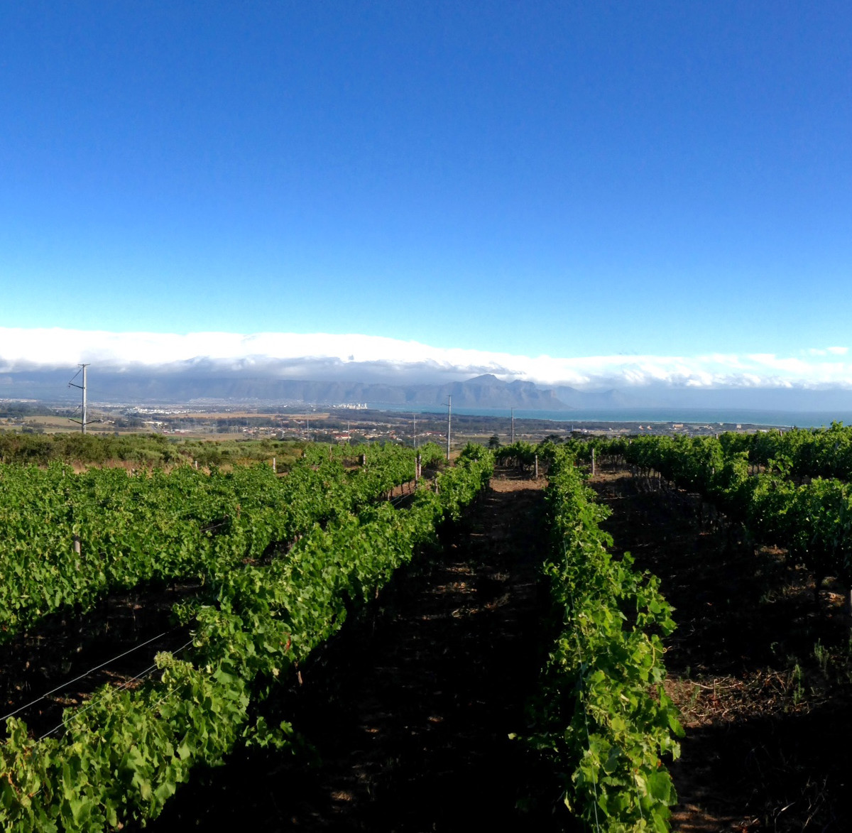 Some of the Craven Wines Vineyards.