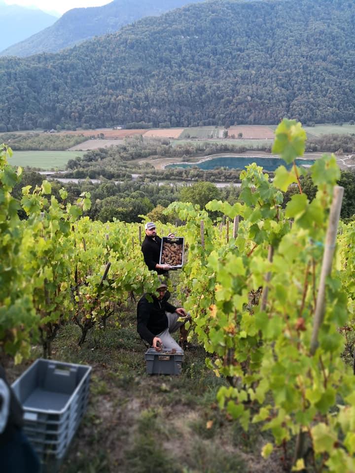Harvest time in Savoie