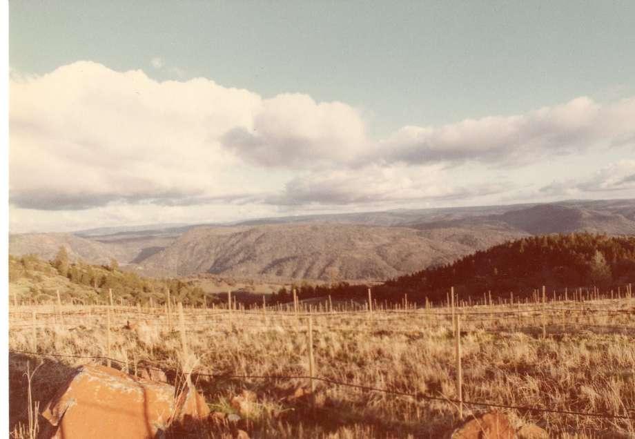 Renaissance vineyards in development, 1981