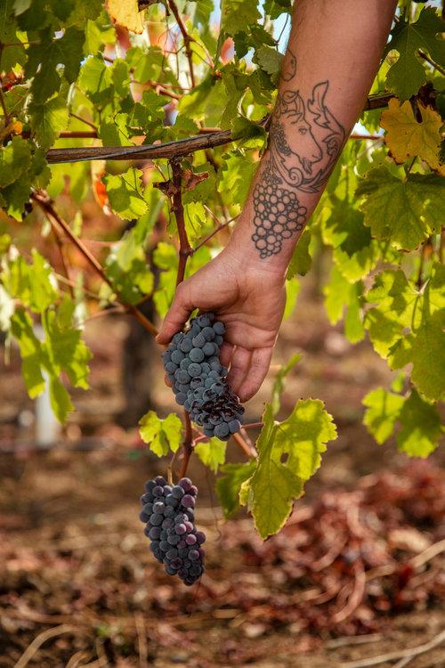 Evan-Lewandowski-Natural-Wines-140.jpg