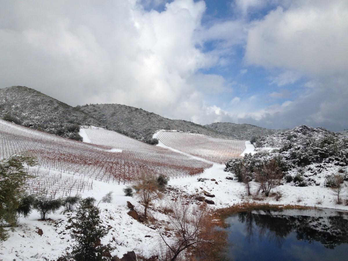 A beautiful view of Rorick Heritage Vineyard
