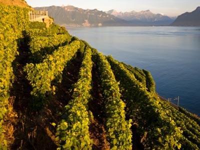 jura-wine-region-1.jpg