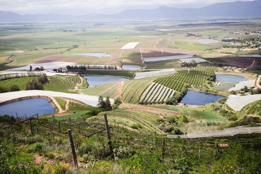 Sick shot of some of David & Nadia's vineyards in Swartland