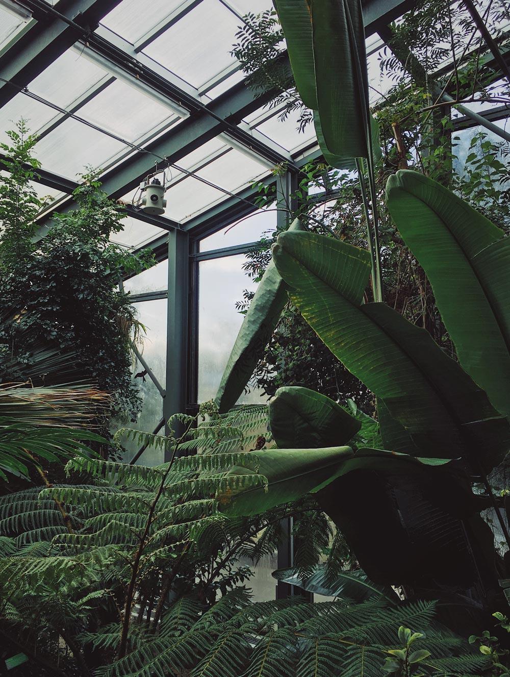 Botanic-garden2_opt.jpg