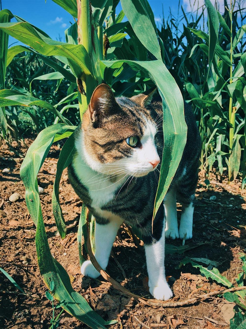 cat_opt.jpg