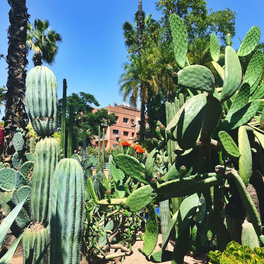 jardin-majorelle3.jpg