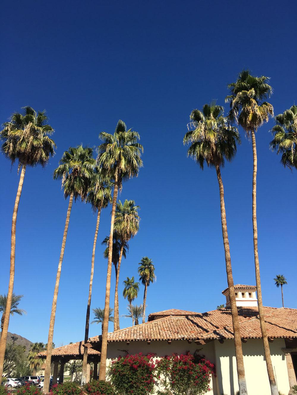 palm-springs3.jpg