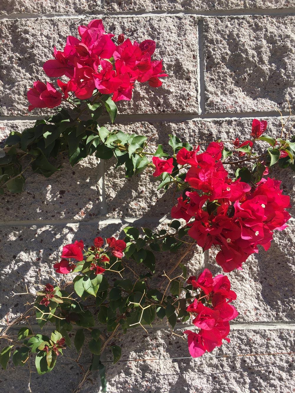 ps-flowers.jpg