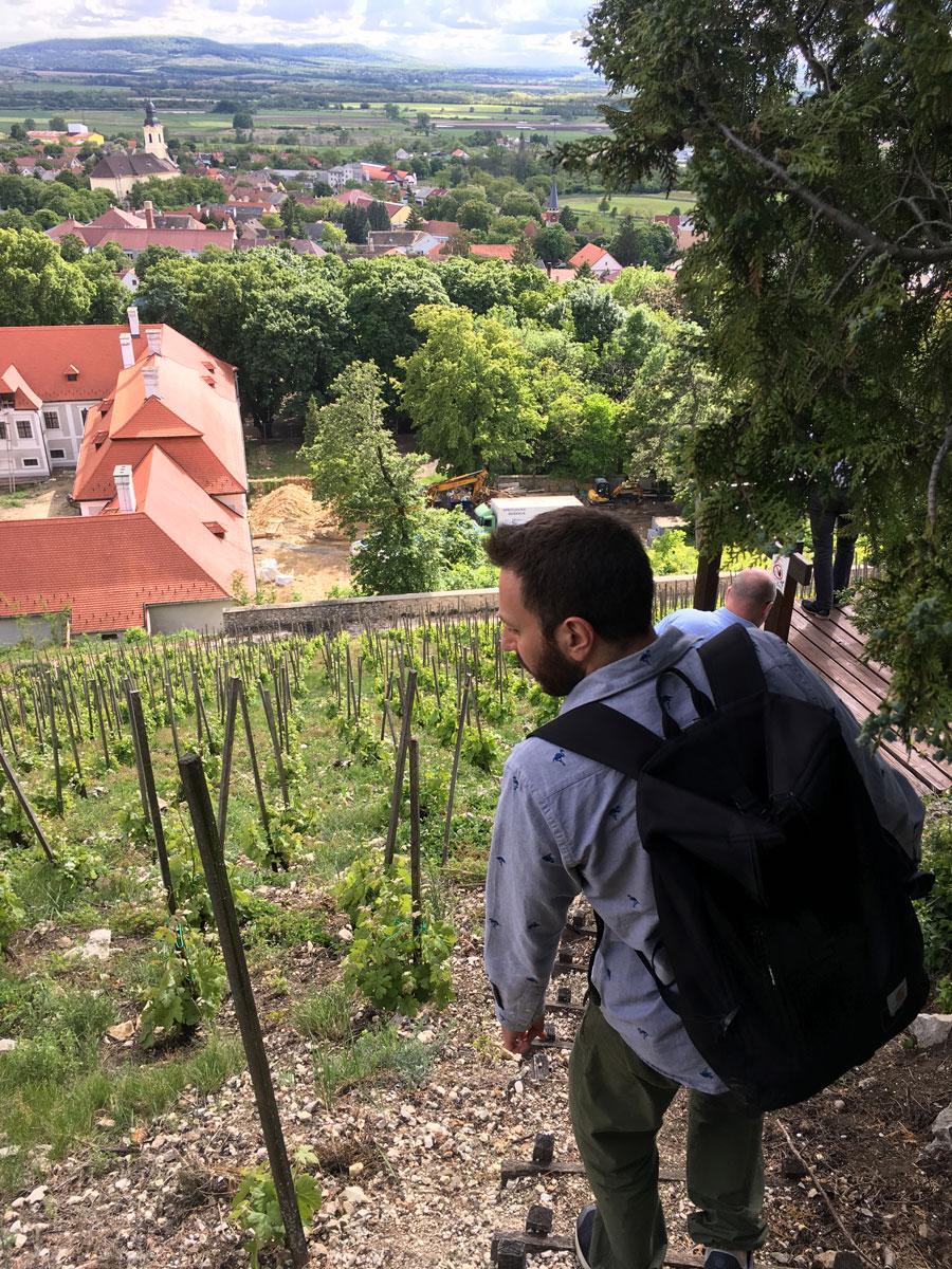 hungarian_wine1.jpg