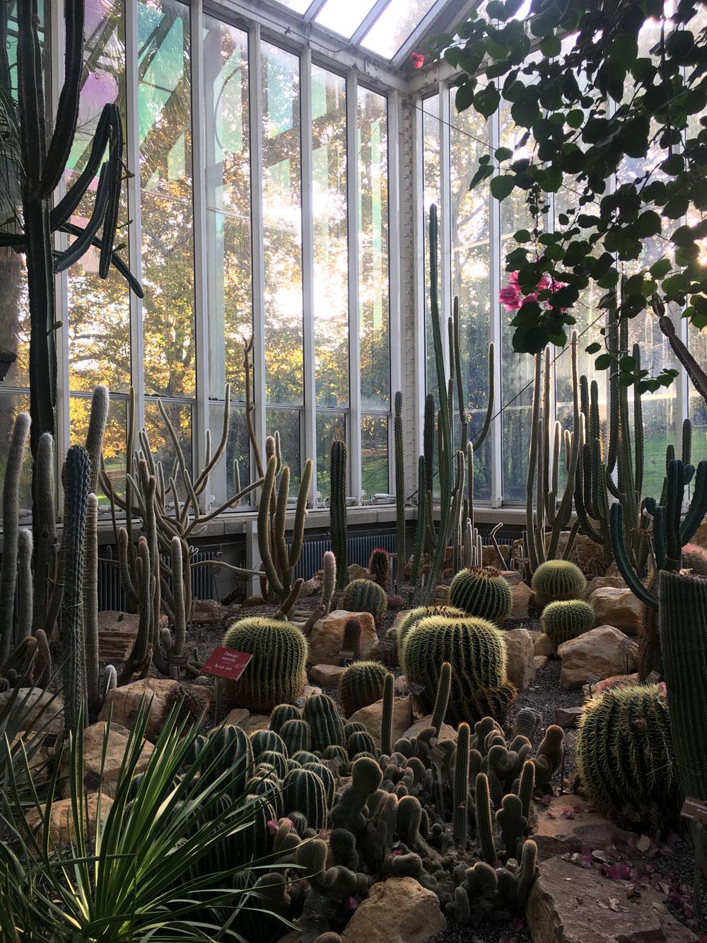 botanical_garden4.jpg