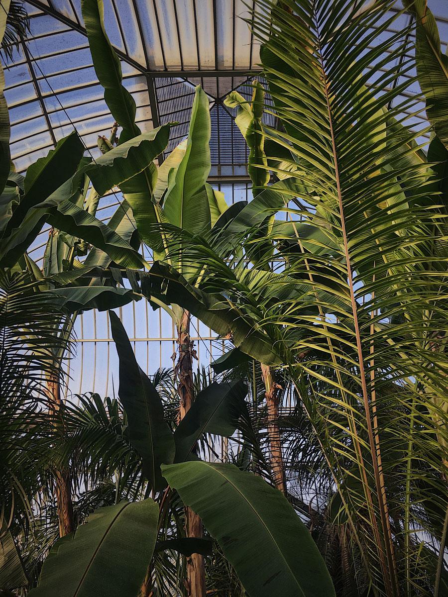 botanical_garden3.jpg