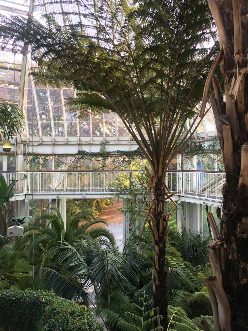 botanical_garden5.jpg