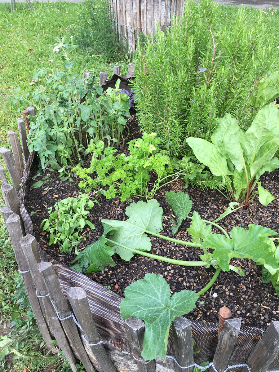 urban_garden2.jpg
