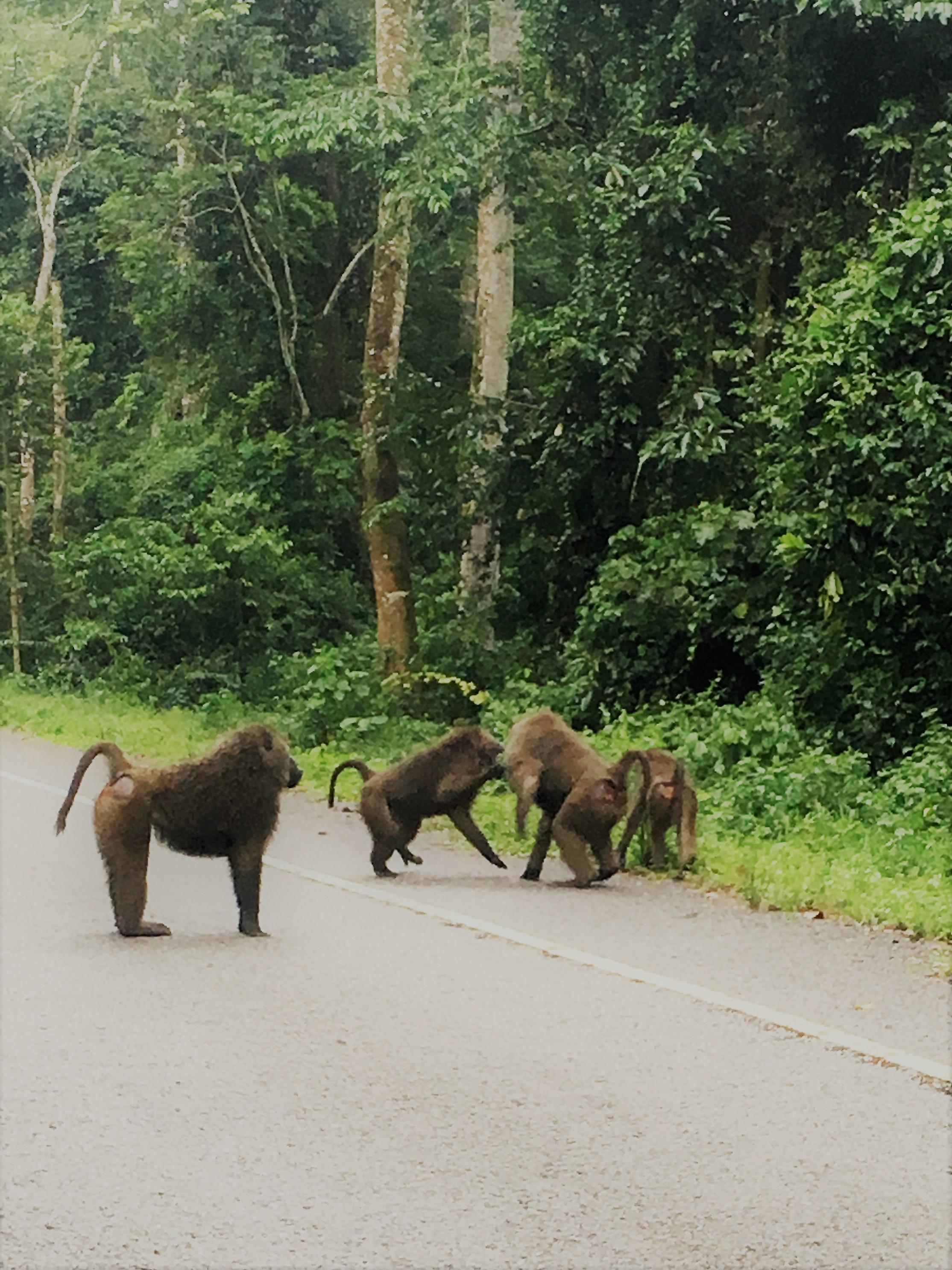 uganda baboo.jpg